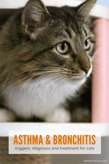asthma and bronchitis - triggers, diagnosis and treatment for cats