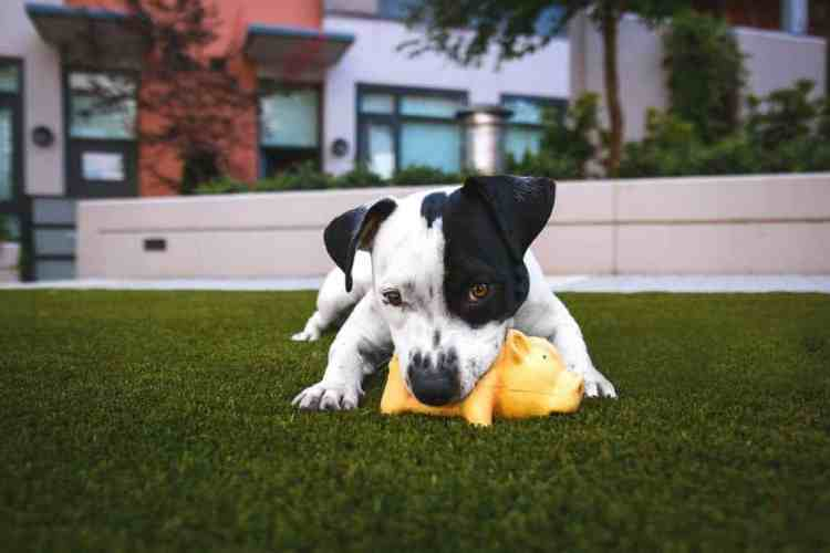 5 Types of Puppy Aggression and What to Do About It