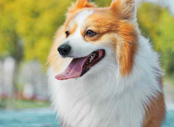 how to treat puppy diarrhea