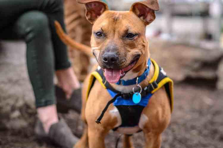 Types of Specialized Dog Training