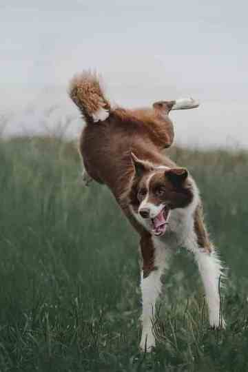 Stop a Dog From Jumping When Excited