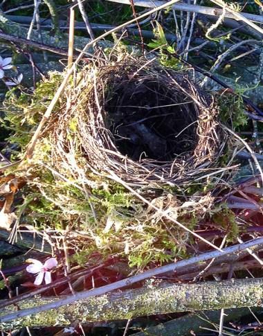 Das Nest Ex1web.2015
