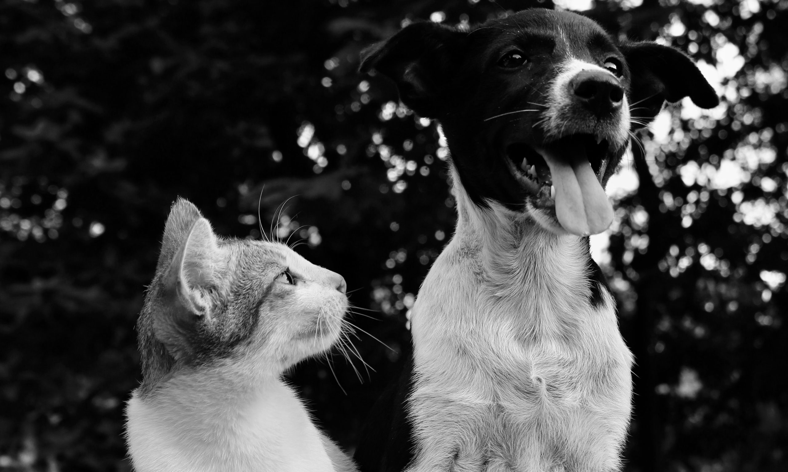 Helping People Who Are Helping Animals Black Lives Matter