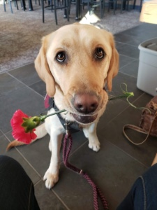 photo of dog with a flower