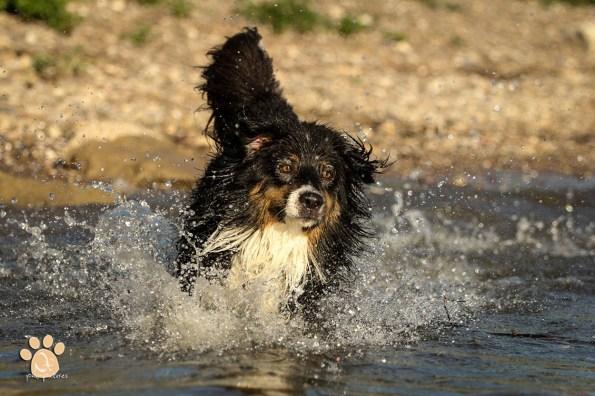 Jack im Rhein