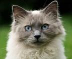 cat-1978420_640