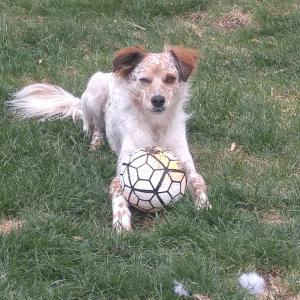 Walt Plays Ball