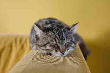 dia del gato