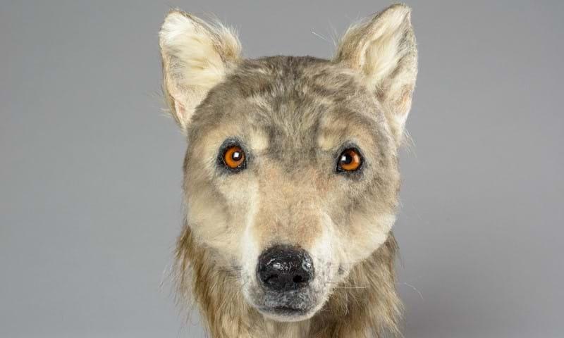 perro miles de años