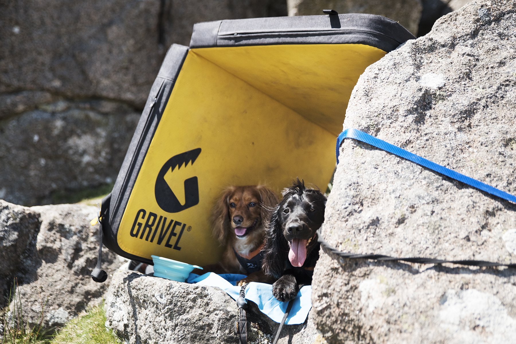 Crag Dogs at Sheepstor, Dartmoor   Paws and Tors