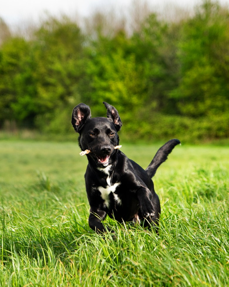 JR Pet Products | Paws and Tors