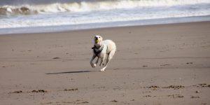 A beach dog walk