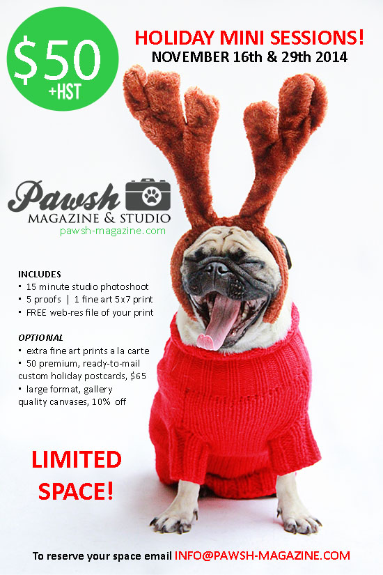 TORONTO DOG PHOTOGRAPHER PET HOLIDAY MINI SESSIONS