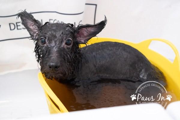 spa, 寵物spa, 皮膚健康spa, 皮膚健康浴, 寵物美容spa
