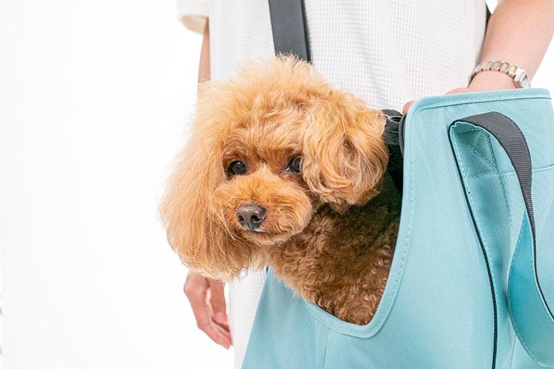 日本寵物用品, 寵物袋, 狗袋, 貓袋, 寵物外出用品, pet bags