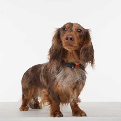 Tickless mini for dogs 天然超聲波驅牛蜱驅蟲器