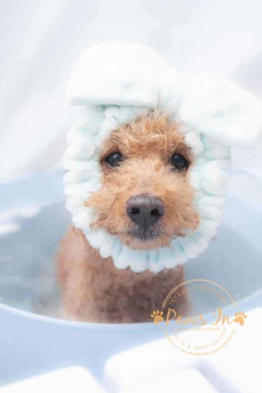 狗 Spa, 炭酸泉, dog spa, 日本狗SPA