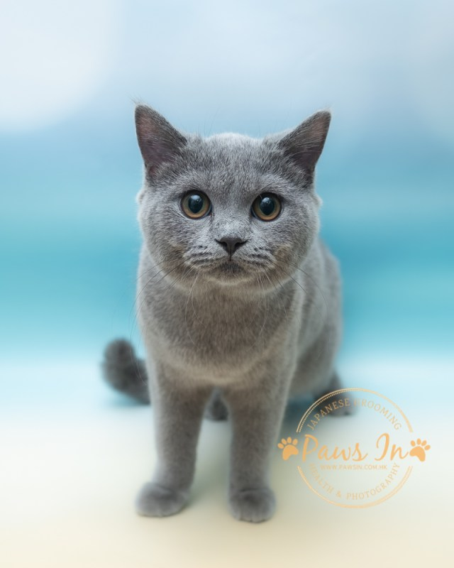 元朗寵物美容, 貓美容, 貓沖涼, 元朗貓沖涼