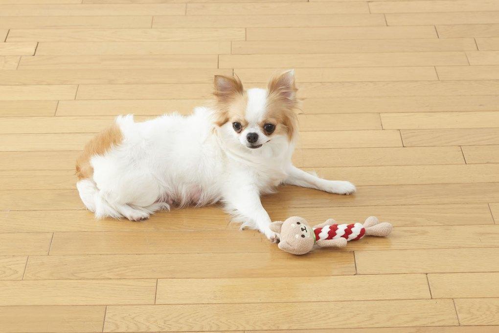 日本 Dental Animal 柴犬 潔齒玩具