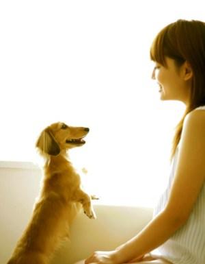 Paws In Training Dog Training Philosophy
