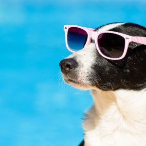 How to Keep Your Dog Cool for the Summer