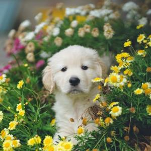 Petals for Paws