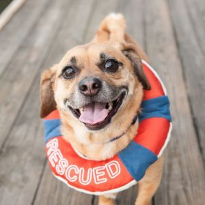 The importance of finding and supporting reputable rescues