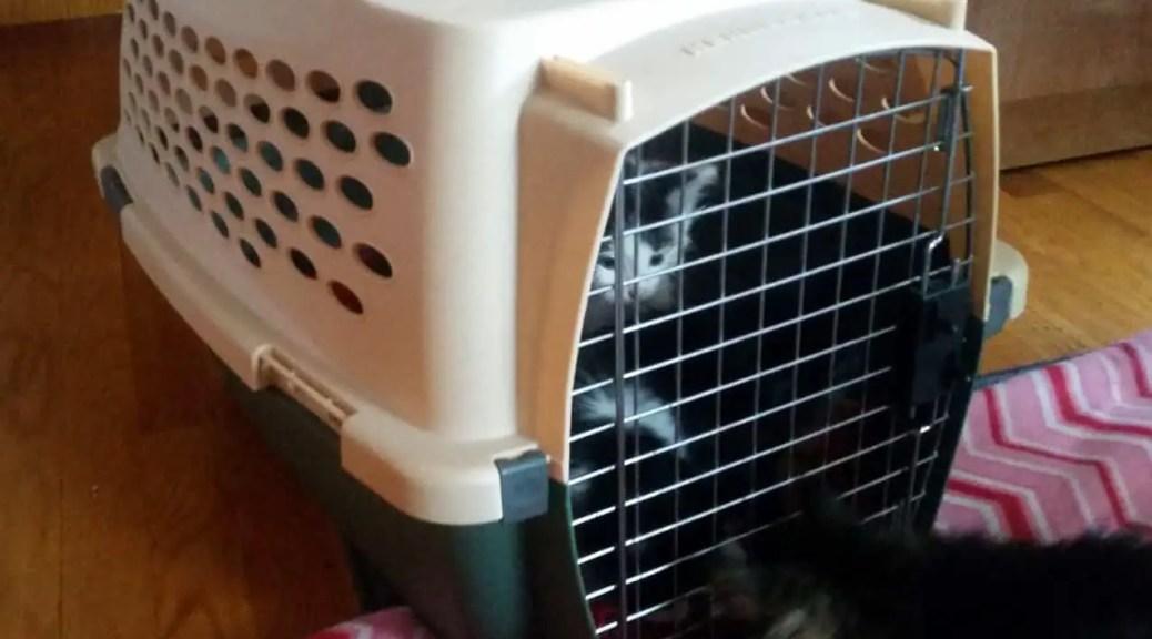 Kittens in cat carrier.