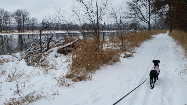 Cold weather safety guide: Winter trails at Goose Island in her winter fleece.