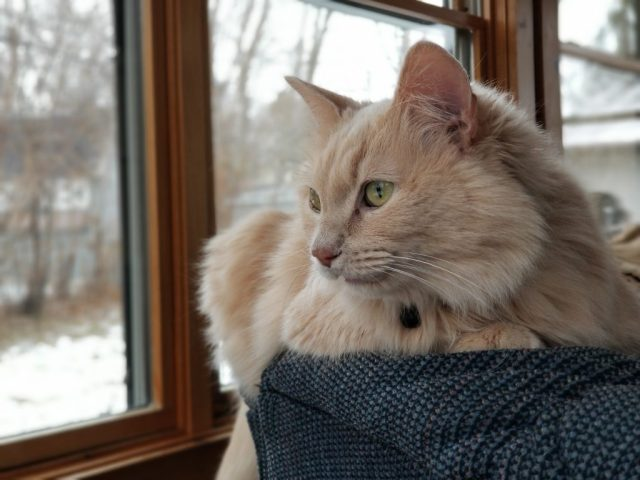 Elara peers out a porch window on a wintry day.