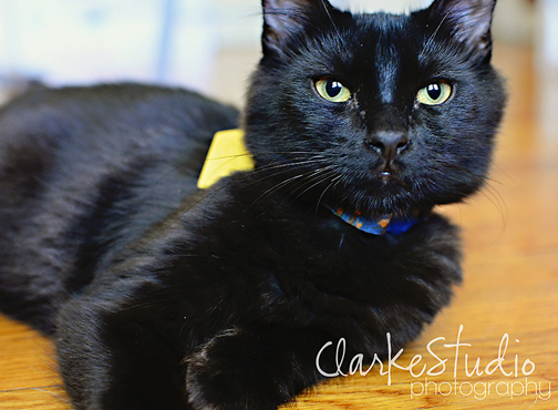 photographing a black cat
