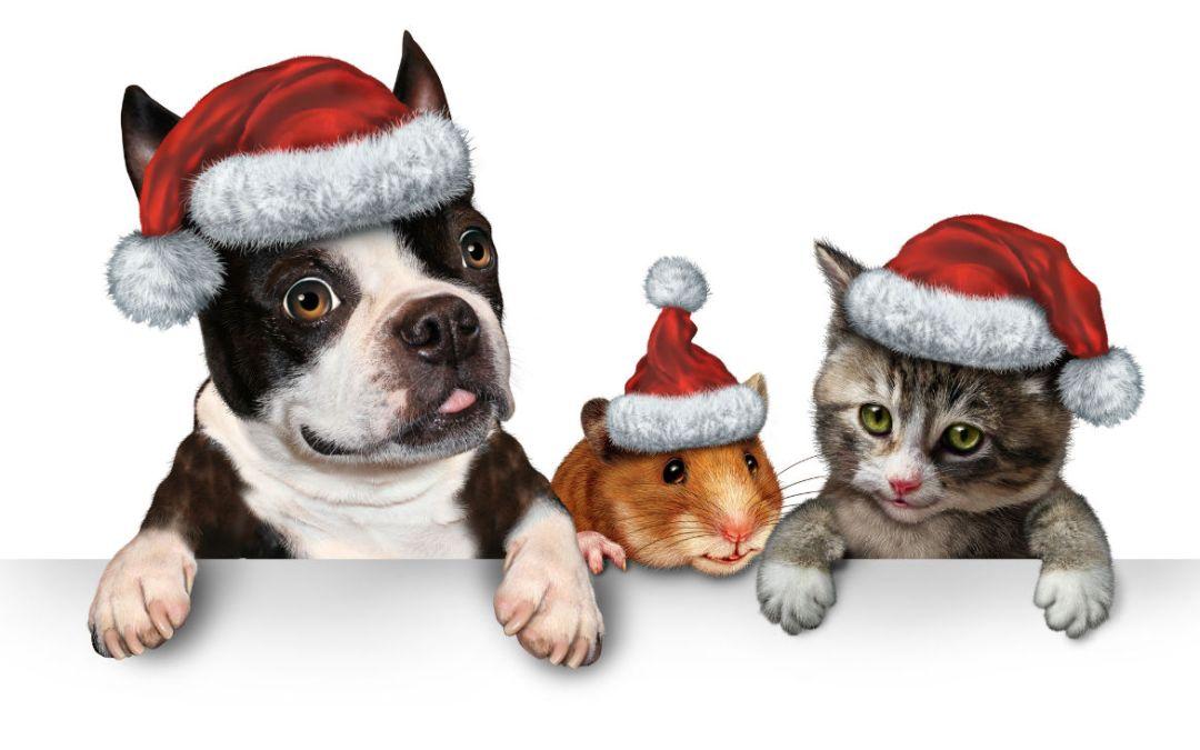 Christmas Holidays and Pets