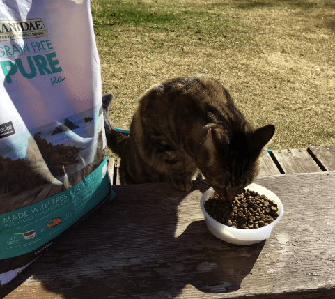 Cat Food Reviews >> 6 Canidae Cat Food Reviews Pros And Cons Pawsome Kitty
