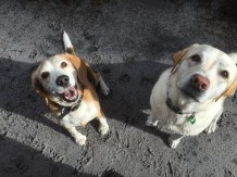 Buddy and Meg