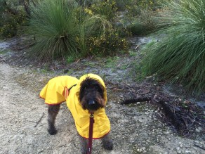 Timmy in smart raincoat
