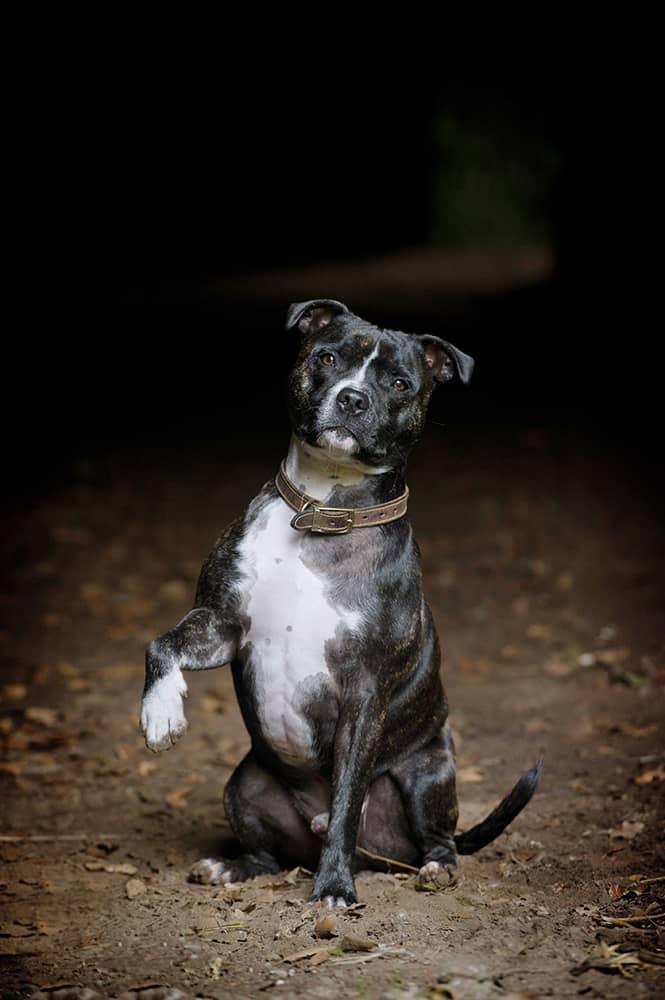 Dog Photo Gallery Mans Best Friend