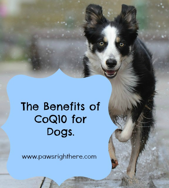 CoQ10 for dogs
