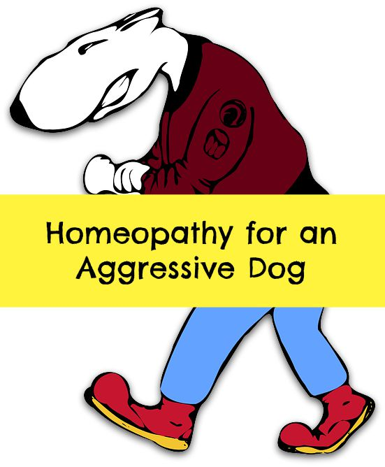 homeopathy for aggressive dog