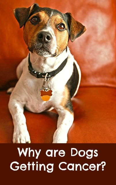 what is causing cancer in dogs