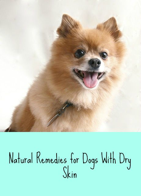 natural remedies for dogs with dry skin