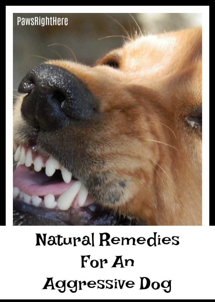 Natural remedies for an aggressive dog