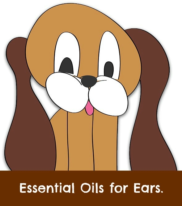 essential oils for dogs ears