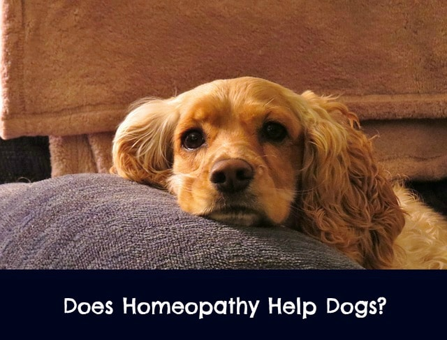 canine homeopathic medicine