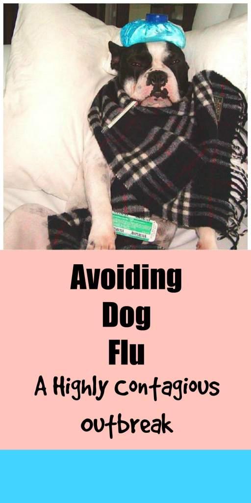 How to avoid dog flu