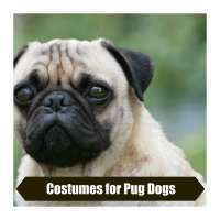 Costumes for Pug Dogs - Paws Right Here