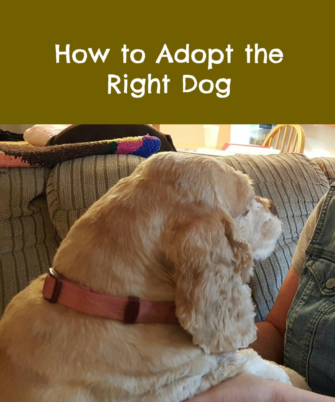 How To Adopt The Right Dog Paws Right Here