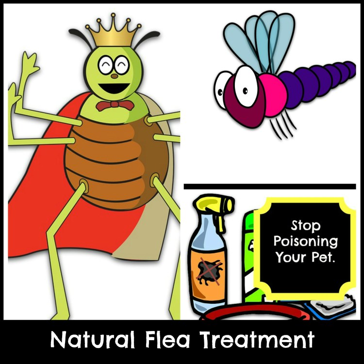natural home flea treatment for dogs