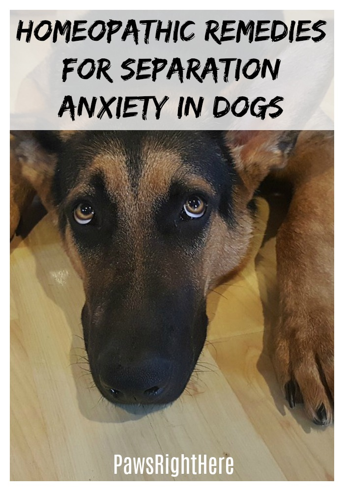 Homeopathic remedies for separation anxiety in dogs
