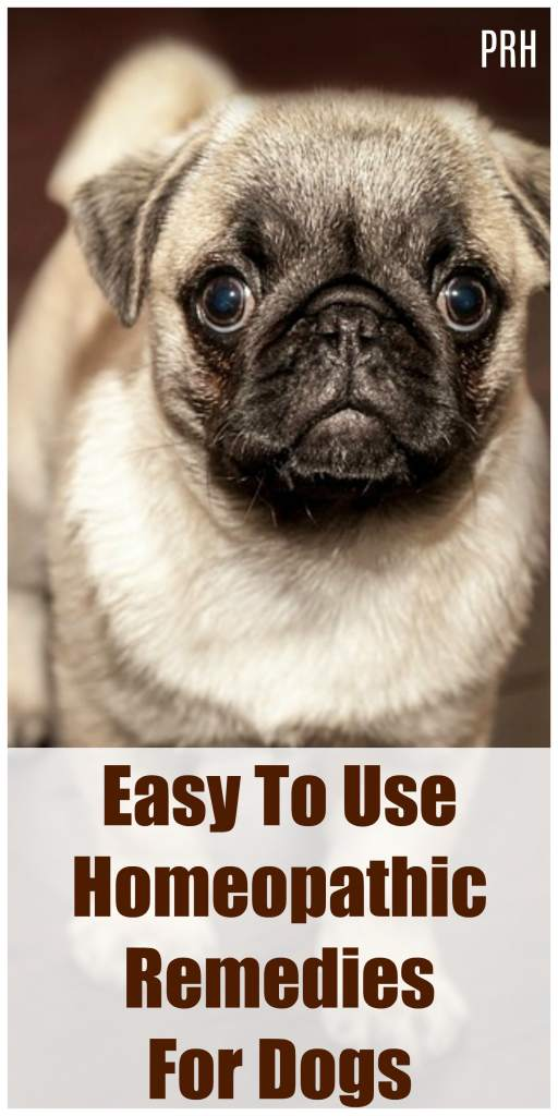 wide spectrum homeopathy for dogs