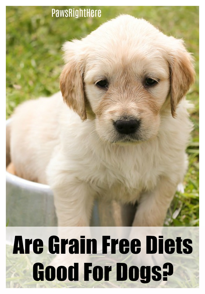 Are grain free diets good for dogs